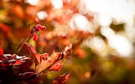 Осенняя идиллия