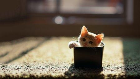 Малютка в коробке