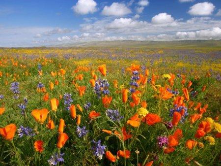 Июньское цветение в природе